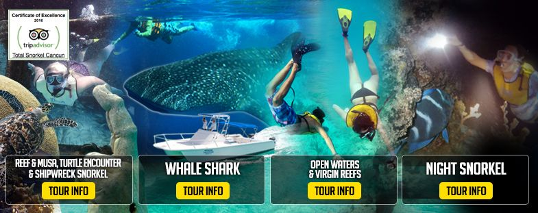 tours on total snorkel cancun