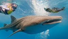 Swim with whale sharks Guided Tour in Cancun