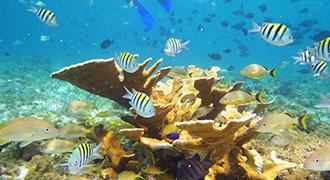 snorkeling cancun hotel zone swim