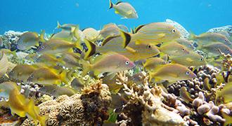 snorkel zone hotelera arrecife