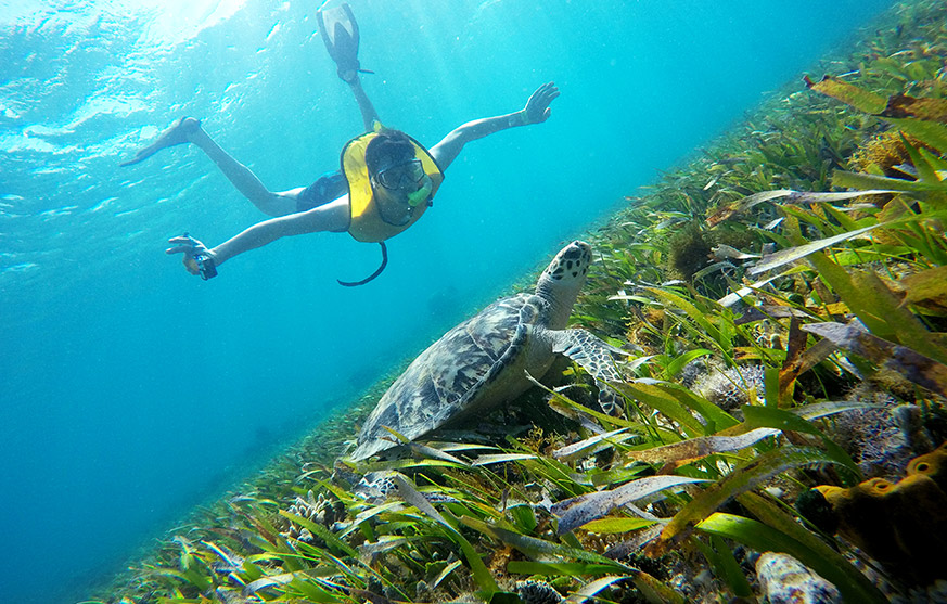 Swim with sea turtles