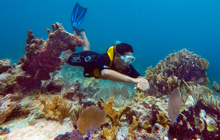 Enjoy the natural beauty underwater