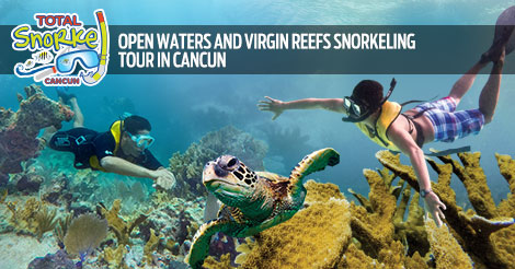 Open Waters And Virgin Reefs Snorkeling Tour In Cancun (on private only)