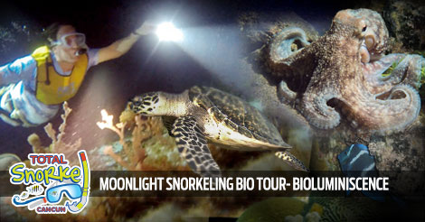 Cancun Moonlight Snorkeling Bio Tour
