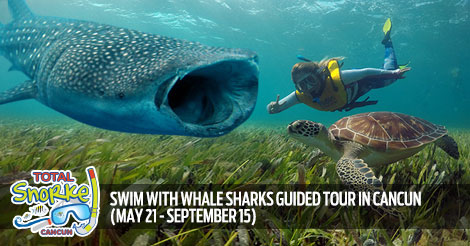 Daily Cancun Swim With Whale Sharks Guided Tour