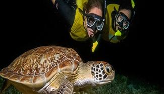 Night Time Cancun Snorkel Tour