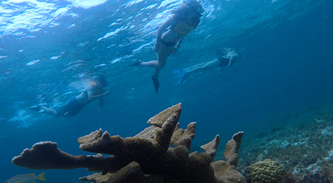 Visit a lively coral reef, full of sea life