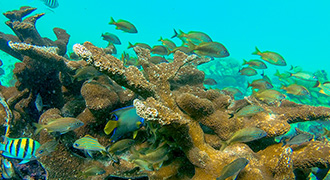 Corals, Fish and more in Cancun